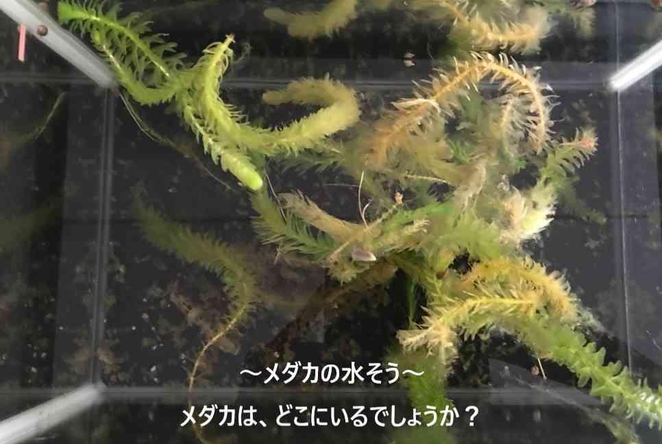め3.jpg